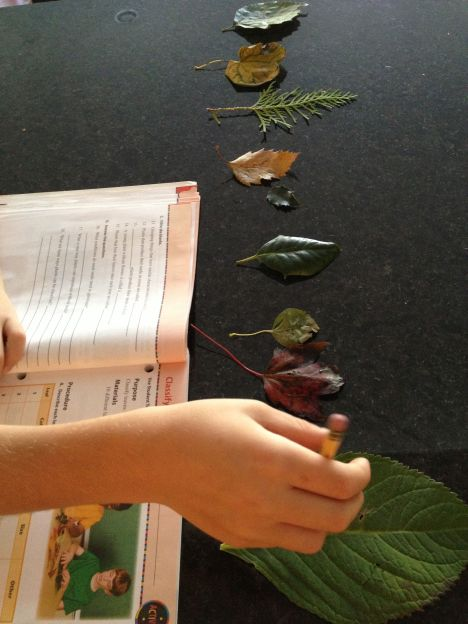 leaf classification